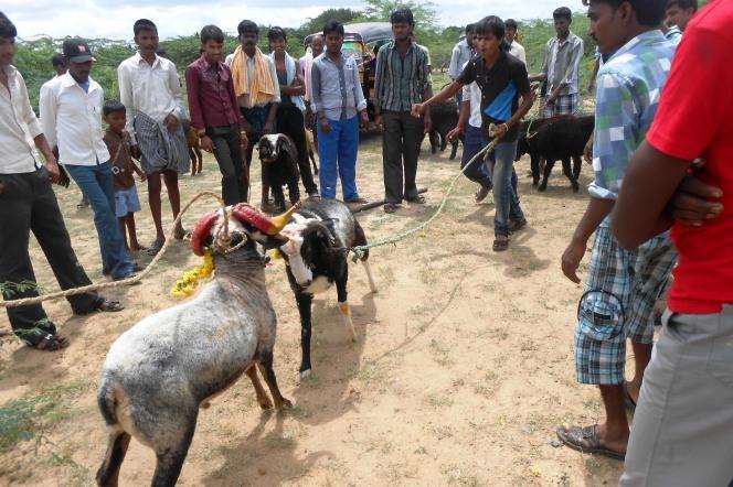 folk games in Yugadi (3)