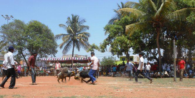 folk games in Yugadi (4)